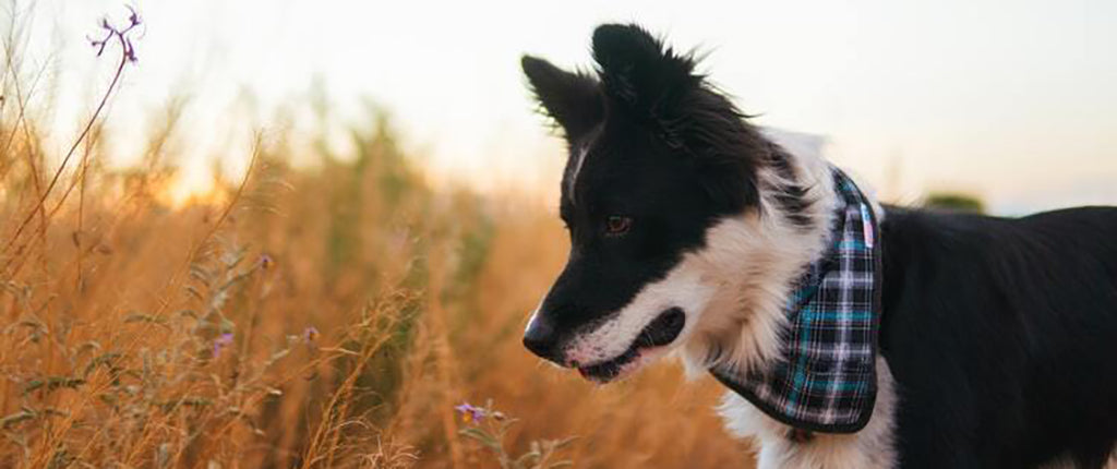 black and white dog in long grass
