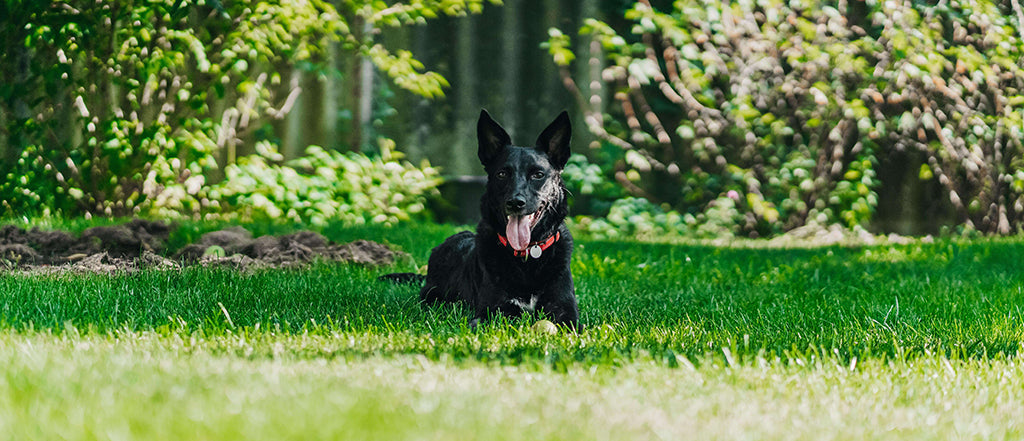 Black dog laying in grass under tree