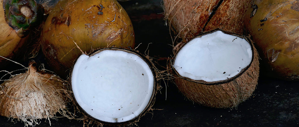 coconuts for dogs