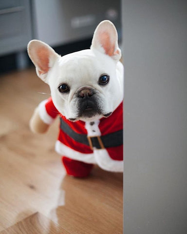 Image of Mr Santa Costume