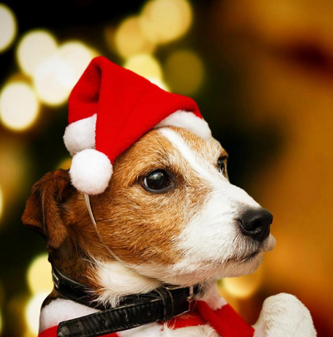 Image of Dog Christmas Hat