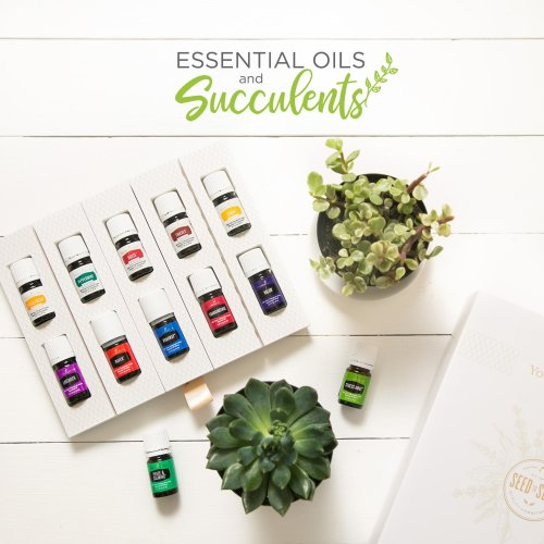 Essential Oils and Succulents
