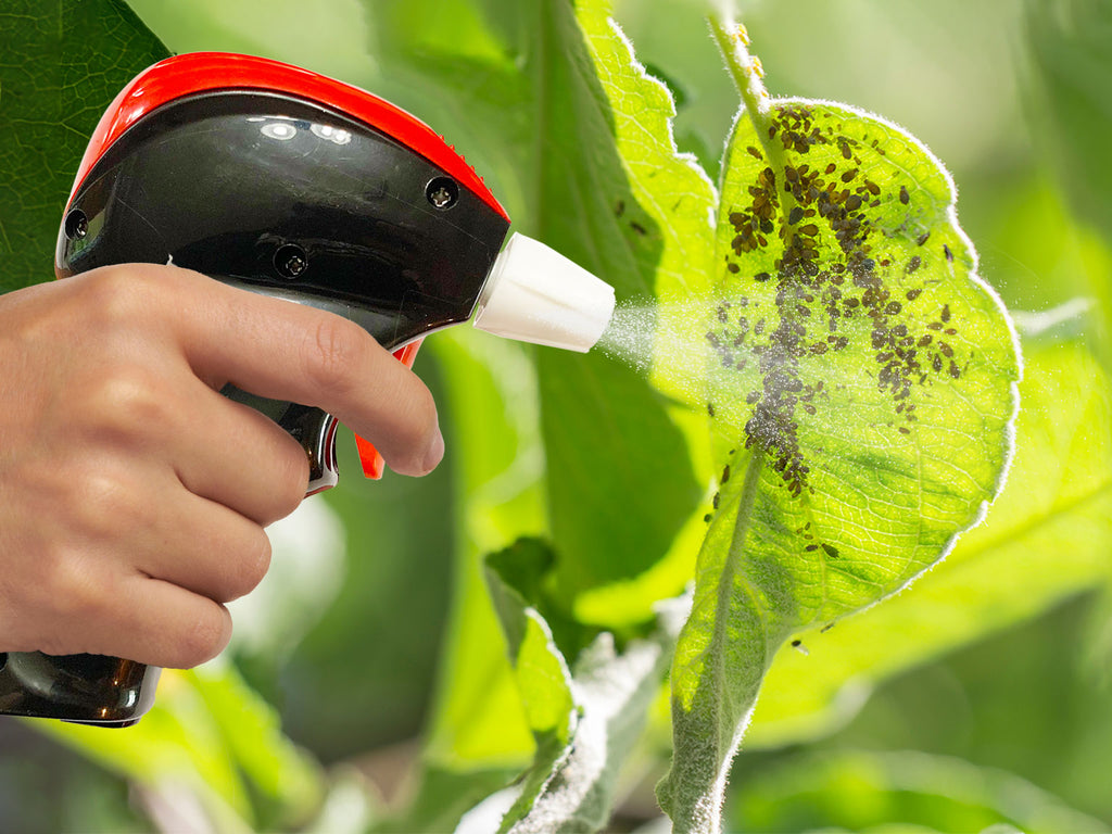 Get rid of scale insects on plants with Petra battery-powered sprayer.