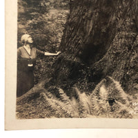 SOLD (hold for KA) Woman with Worlds Big Tree Antique Real Photo Postcard