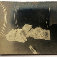 White Kittens Waiting at Home, Real Photo Captioned Postcard