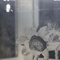 Roses in Window (3 of 3) Glass Plate Negative