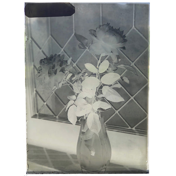 Roses in Window (2 of 3) Glass Plate Negative