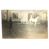 Man with Cigar and White Horse in Backyard Standoff, Old Real Photo Postcard