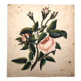 Mid 19th Century Watercolor and Gouache Pink Roses, From Sister to Brother