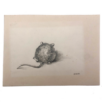 Little Mouse Pencil Drawing by G. Burns