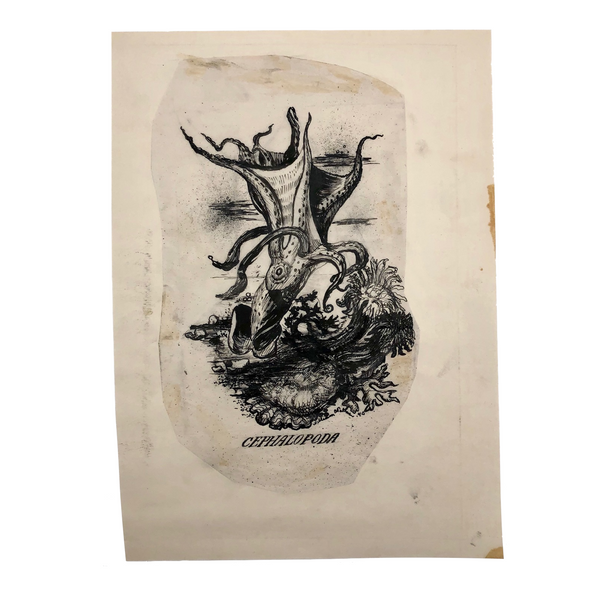 "William Charles Palmer 1940 Pen and Ink ""Cephalopoda"" Drawing"