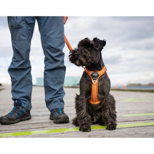 DOG Copenhagen Comfort Walk Air Beisli *2020*