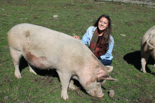 Image of a girl petting a pig who is eating grass