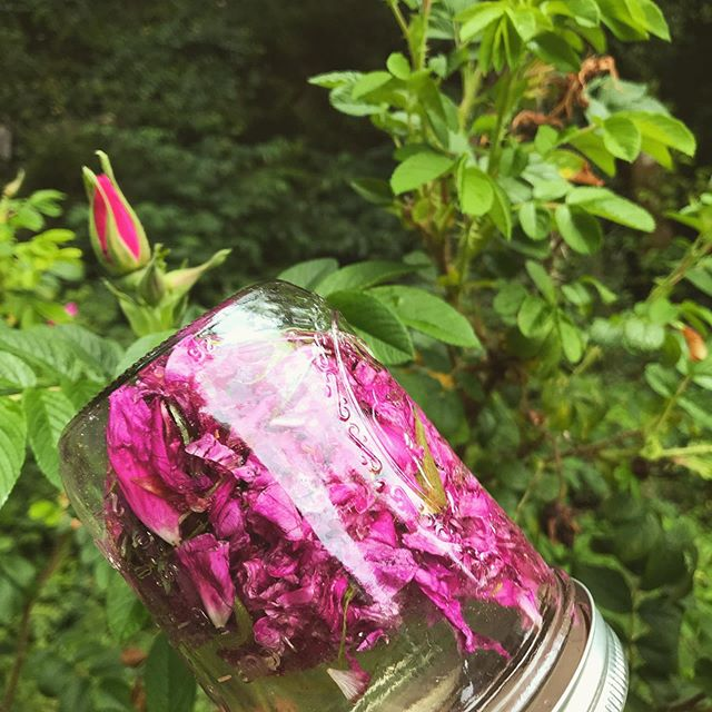 Pure Love~ Rugosa rose + morning dew elixir