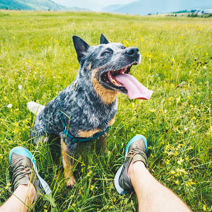 6 Ways to Get Fit With Your Dog