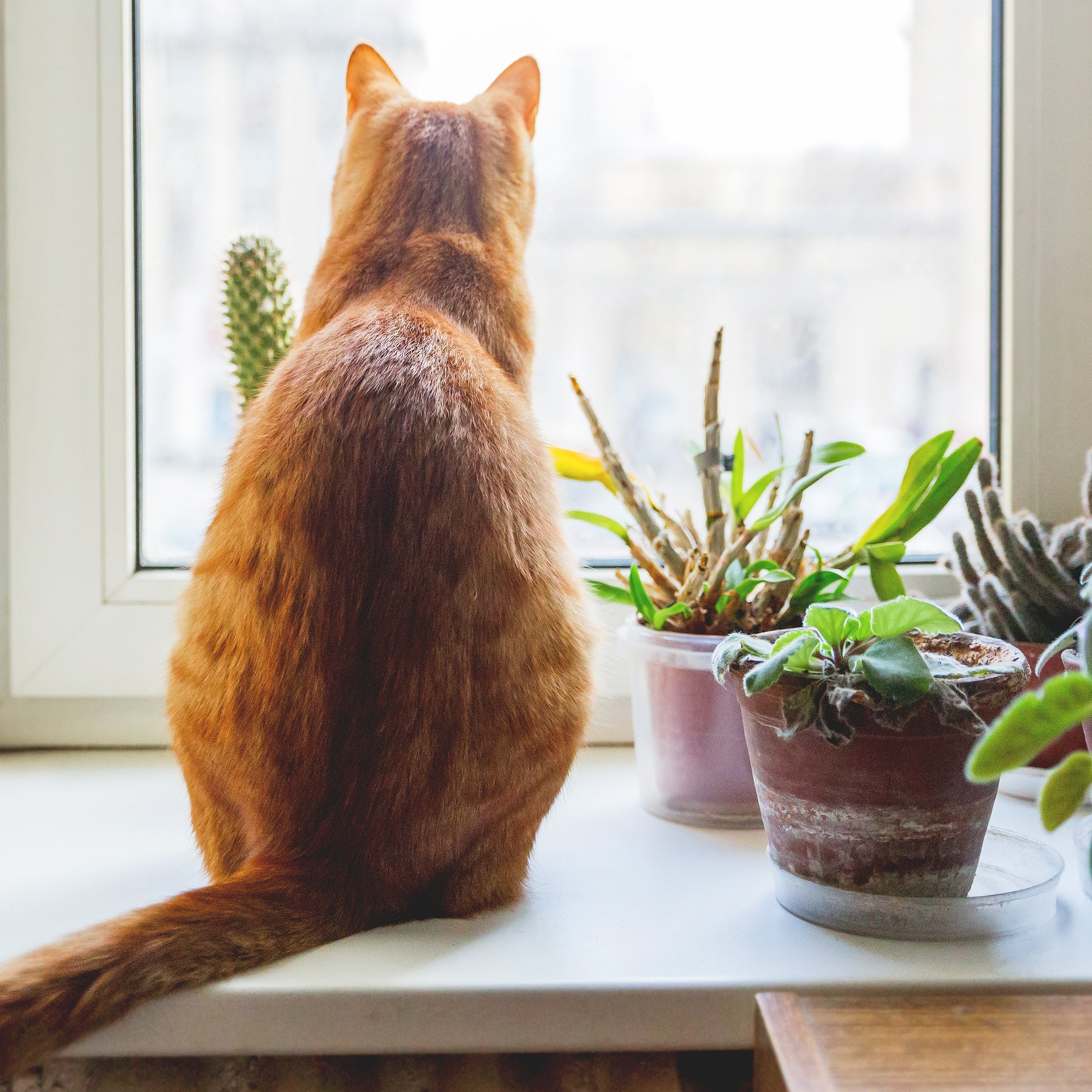 A-Z List of Houseplants That are Toxic to Your Pet