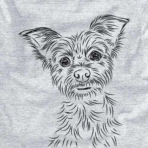 Bingo the Yorkshire Terrier