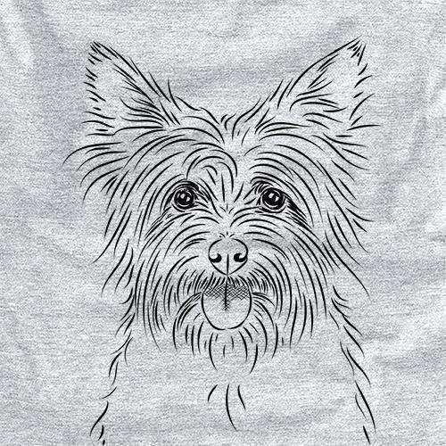 Calum the Cairn Terrier