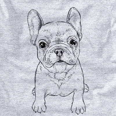 Puppy Pierre the French Bulldog