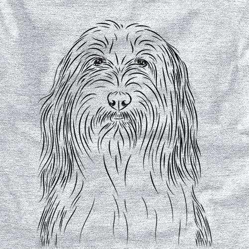 Murray the Bearded Collie