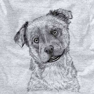 Loki Bear the Australian Cattle Dog Mix