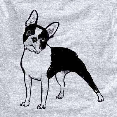 Halftone Boston Terrier