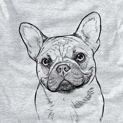 Chew Chew the French Bulldog
