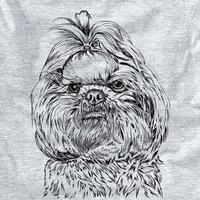 Chewie the Shih Tzu