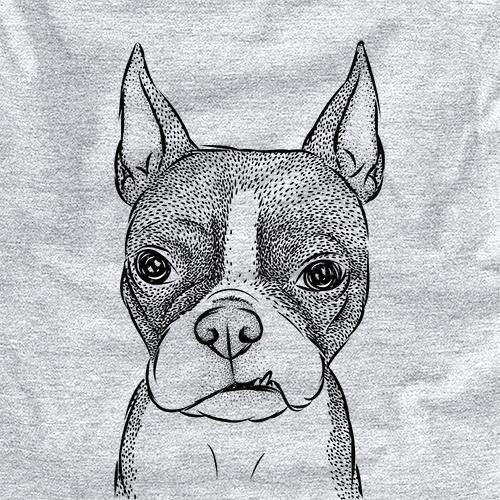 Bean the Boston Terrier