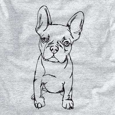 Doodled Franco the French Bulldog Puppy