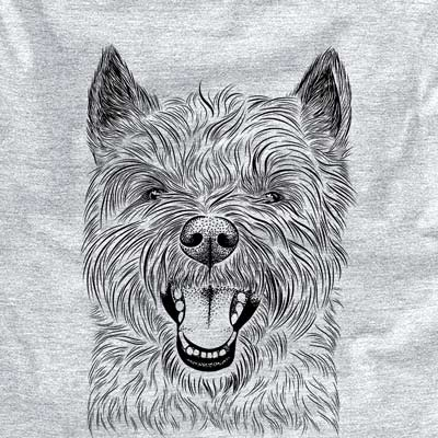 Jeff the Cairn Terrier