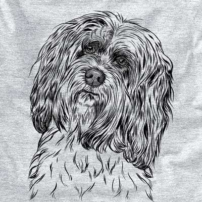 Shenpa the Tibetan Terrier