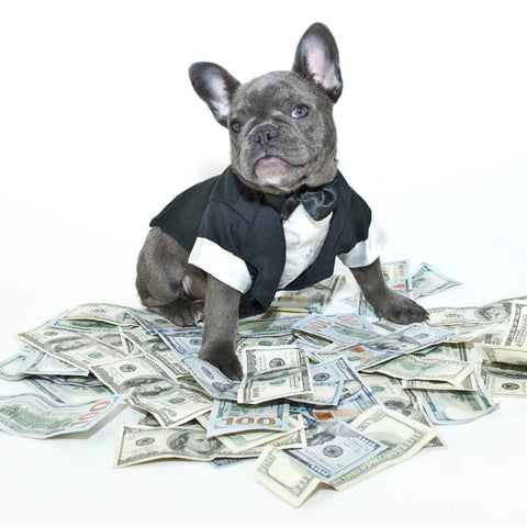 money and a dog