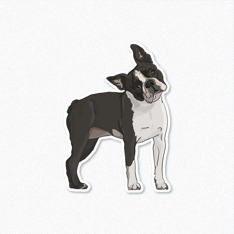 Lola - Boston Terrier - Decal Sticker