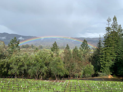 Sabina Vineyards Winery with a beautiful view of Napa Valley