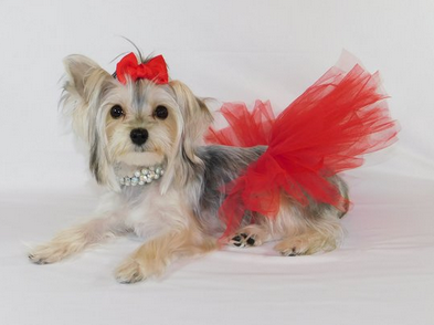 Red Tulle Tutu for Dogs