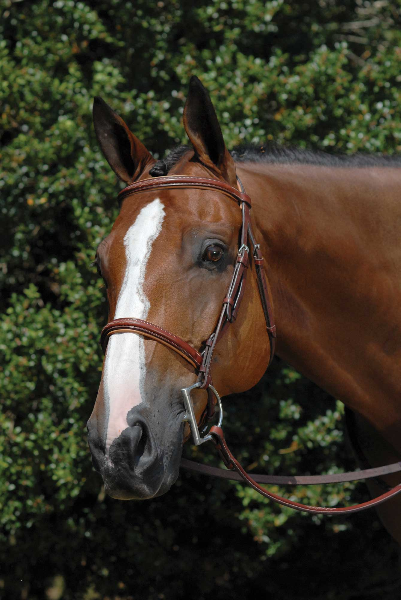 Vespucci Fancy Raised Hunter Bridle with Laced Reins