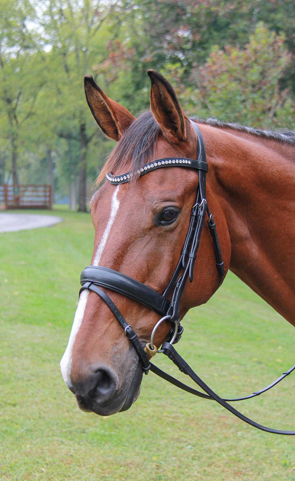 Vespucci Veritas Raised Dressage Snaffle Bridle