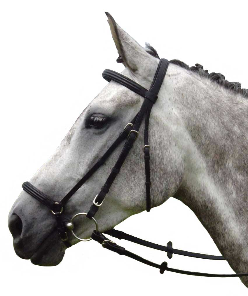 Vespucci Double Raised Dropped Noseband
