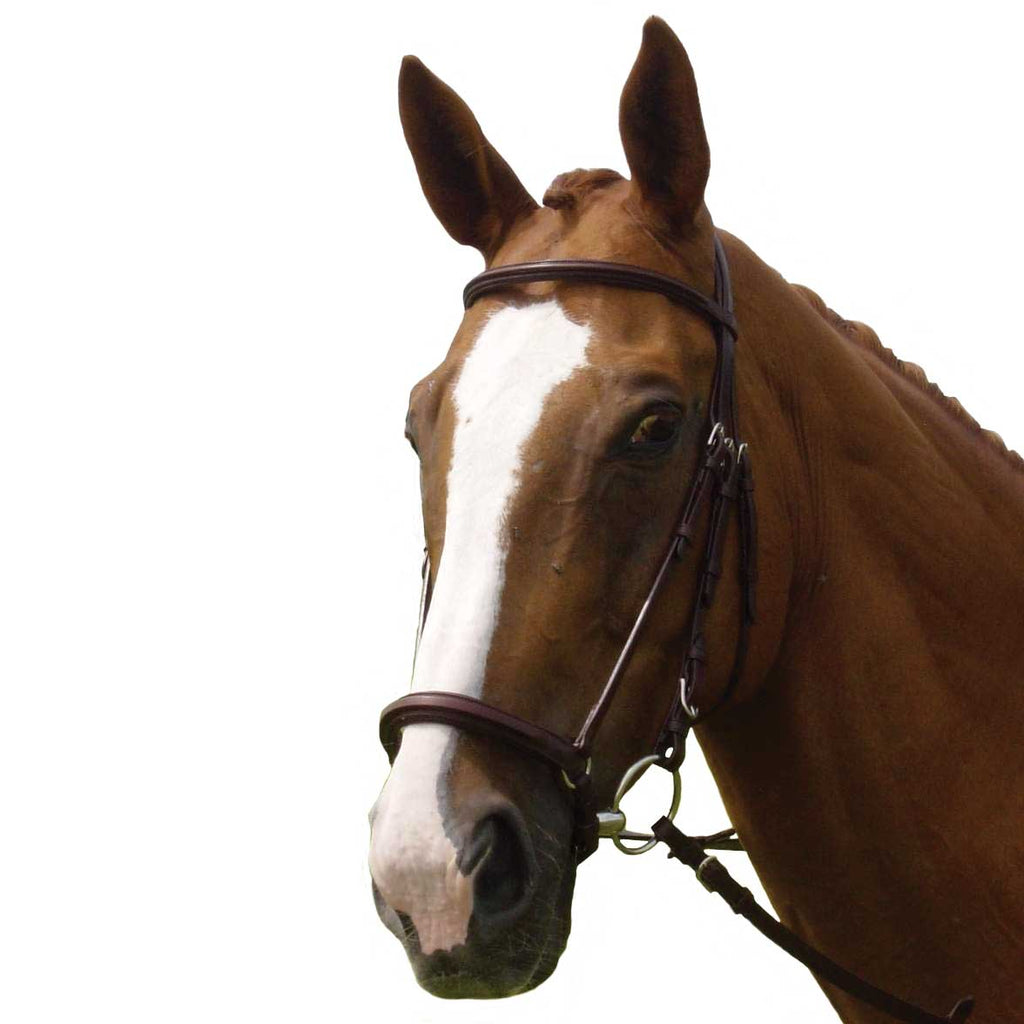 Vespucci Plain Raised Dropped Noseband