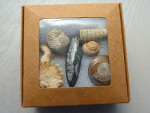 Fossil Box - 6 pieces