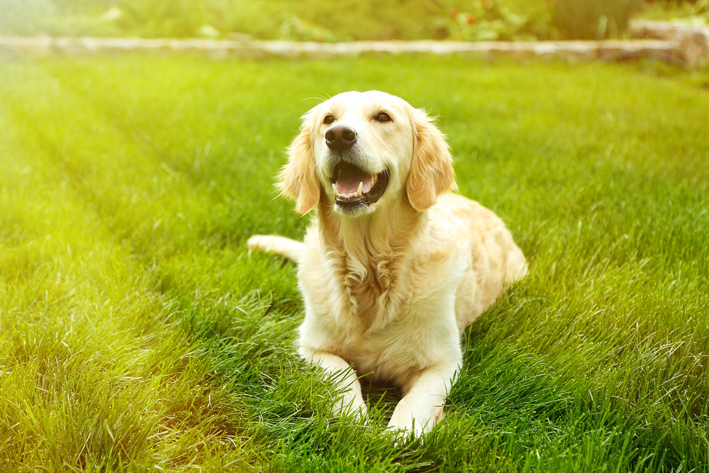 Tips For a Happier Dog this Summer