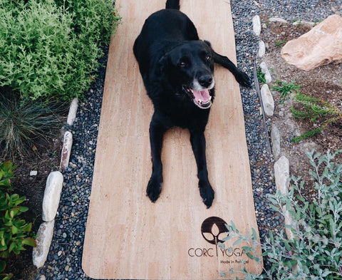 Health Benefits of Pets Dog on Yoga Mat