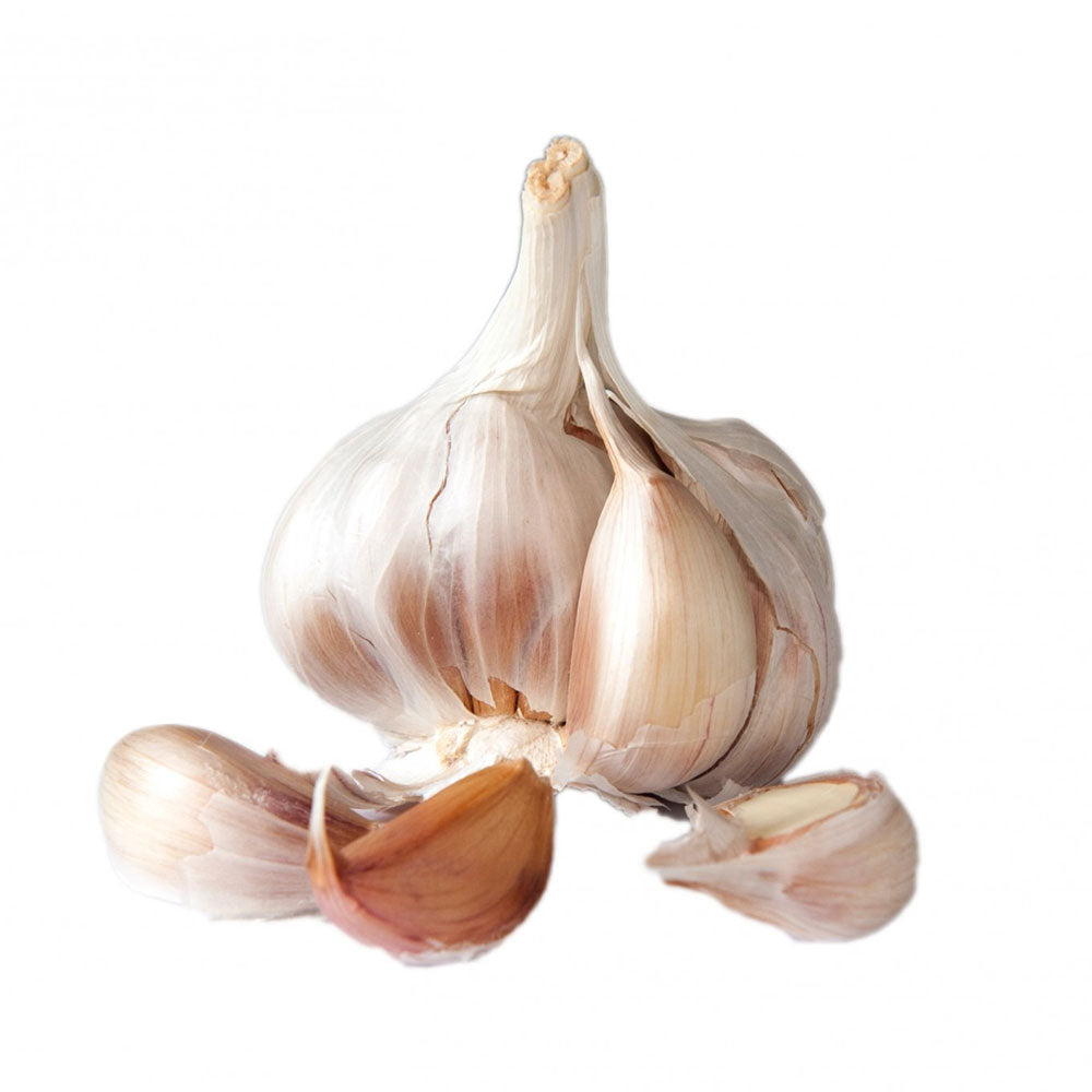 Garlic Bulbs - Music - READY IN AUGUST
