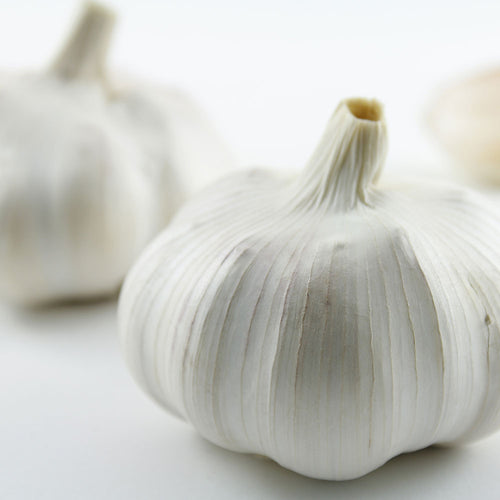 Garlic Bulbs by the LBS - Portuguese Azores (SOLD OUT)