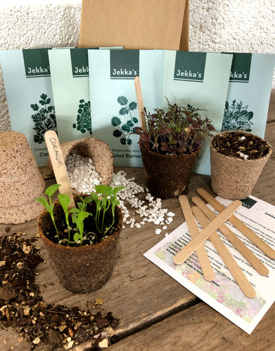 Jekka's Grow At Home Autumn Herb Kit