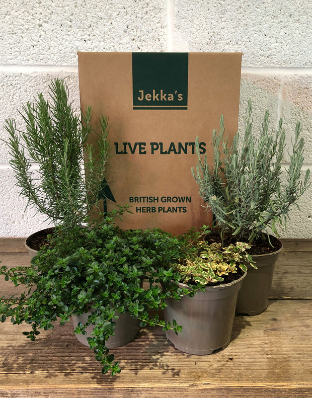 Jekka's Evergreen Collection - 4 * 1 Ltr Herb Plants