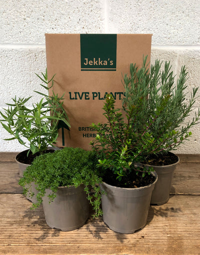 Jekka's Perennial Collection - 4 * 1 Ltr Herb Plants