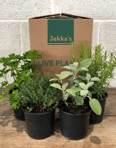 Jekka's Autumn Herb Box - 4 * 1 Ltr Herb Plants
