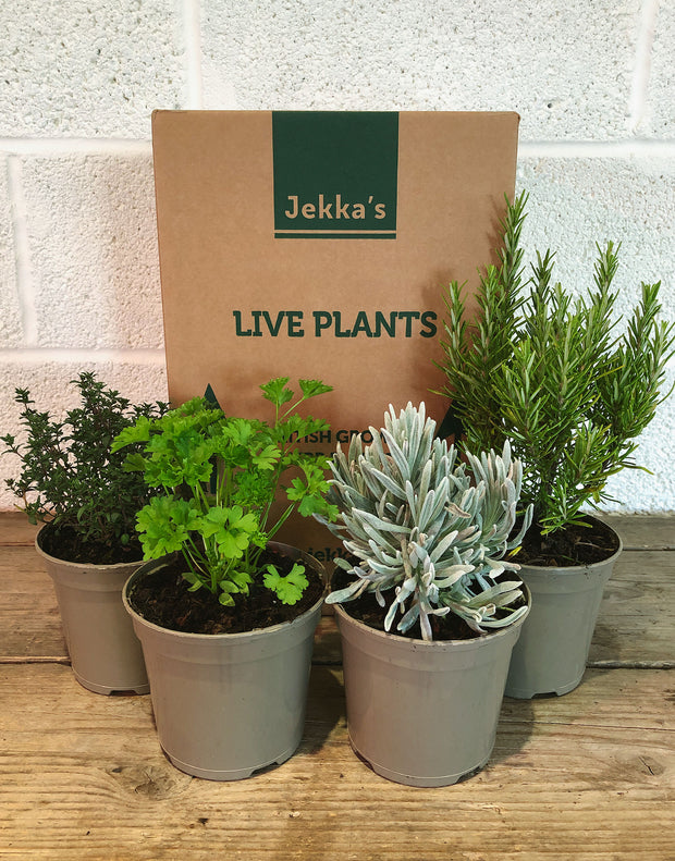 Jekka's Winter Essential Collection - 4 * 1 Ltr Herb Plants